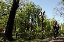 Už v úterý si lidé, kteří procházeli nebo projížděli českobudějovickým parkem Na Sadech, museli dávat pozor na cestu. V oblíbeném zeleném klínu v centru města se totiž začalo s kácením předem vytypovaných jedenácti stromů.