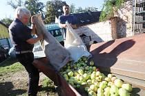 Výkup jablek v Mladém v Českých Budějovicích. Ročně zde vykoupí asi padesát tun padaných jablek k