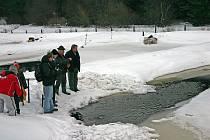 Chovné rybníčky v Borových Ladách.