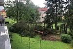 V Budějovicích na Pražském předměstí vítr vyvrátil strom.