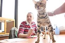 Opuštěných koček jsou jen na Českobudějovicku desítky. Každý, kdo se rozhodne pro adopci, nebude litovat. Většina koček není příliš náročná.