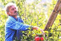 Na podzim se hlavně češe ovoce a často i ve velkých výškách, proto je třeba si dávat velký pozor.