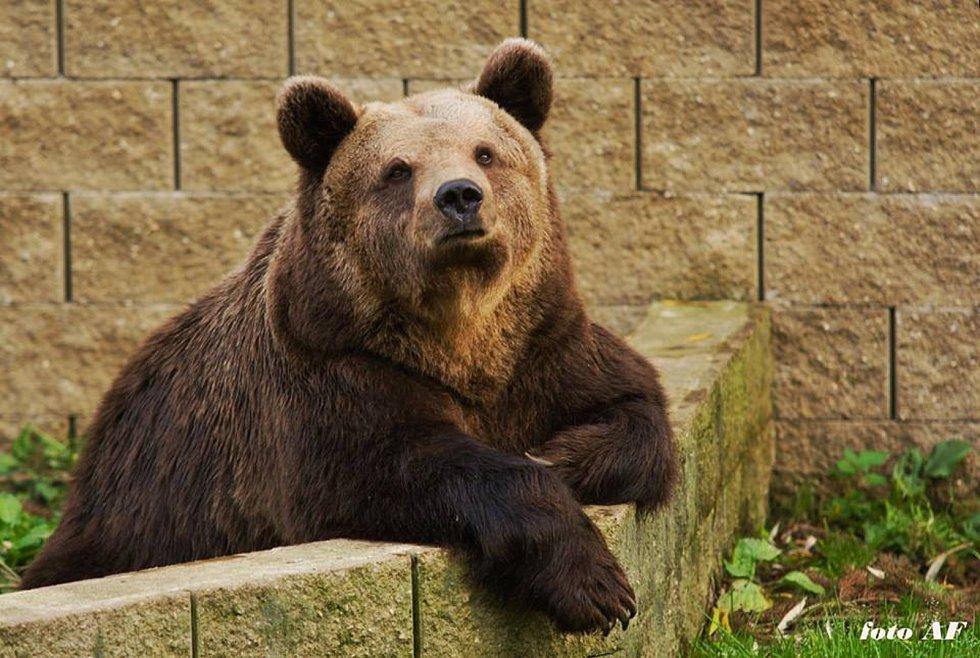 Medvědice Airina je v nejlepších letech.
