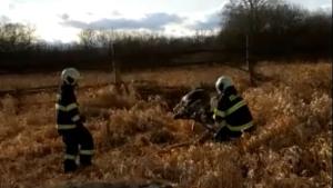 Za požár mohl pes, hasiči letos zachránili i papouška, užovku či kachnu