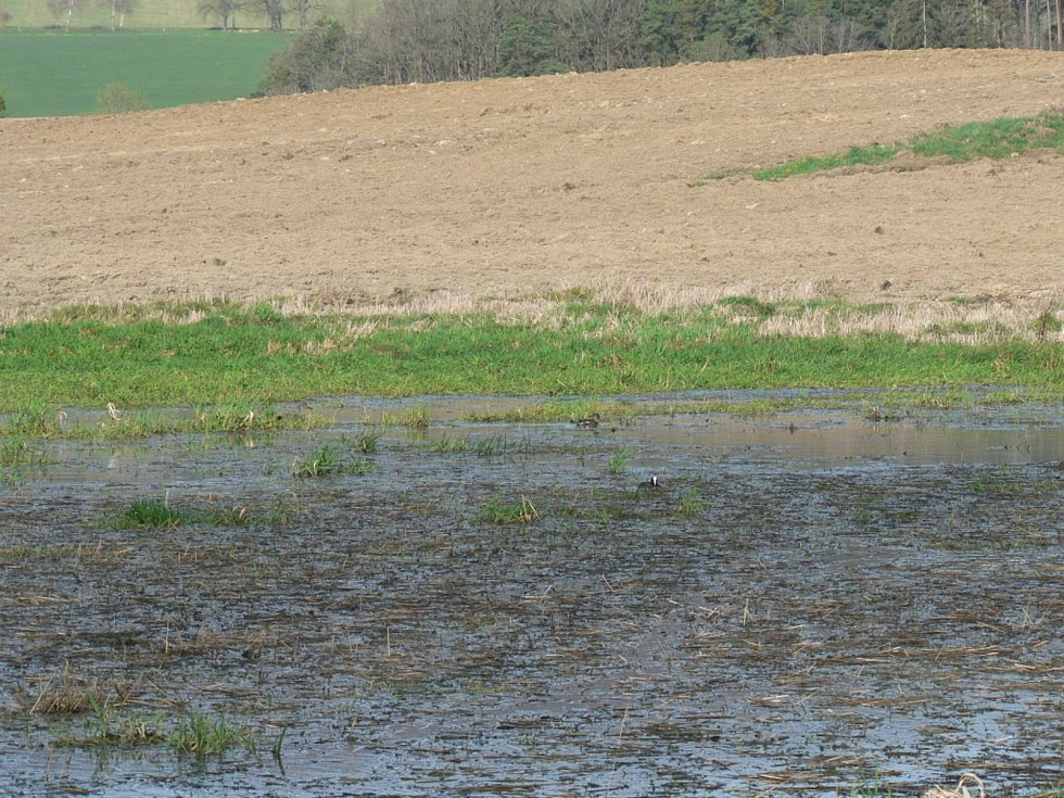 Lysky na zatopeném poli mezi Holašovicemi a Zábořím.
