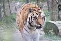 Zoologická zahrada Dvorec u Borovan