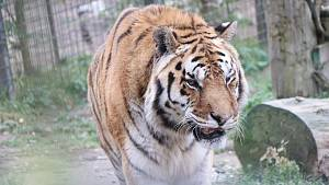 Zoo Dvorec čelí v době covidu velkým ztrátám, zvířatům chybí lidská přítomnost