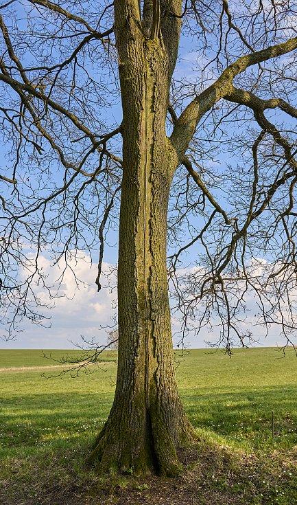 Duch stromový 32 - s kůrou na zip