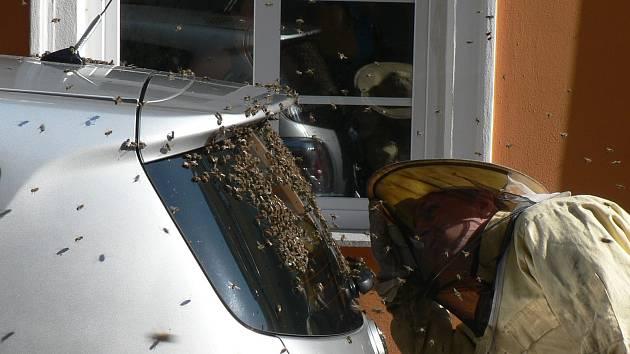 Hasiči ve slunečném počasí lákají zbloudilá včelstva do rojáčku.