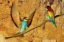 Krásné barevné vlhy pestré našel náhodou Vladimír Kolář, a tak je vyfotil.