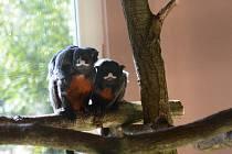 V Zoo Dvorec u Borovan přibyla jarní mláďata.