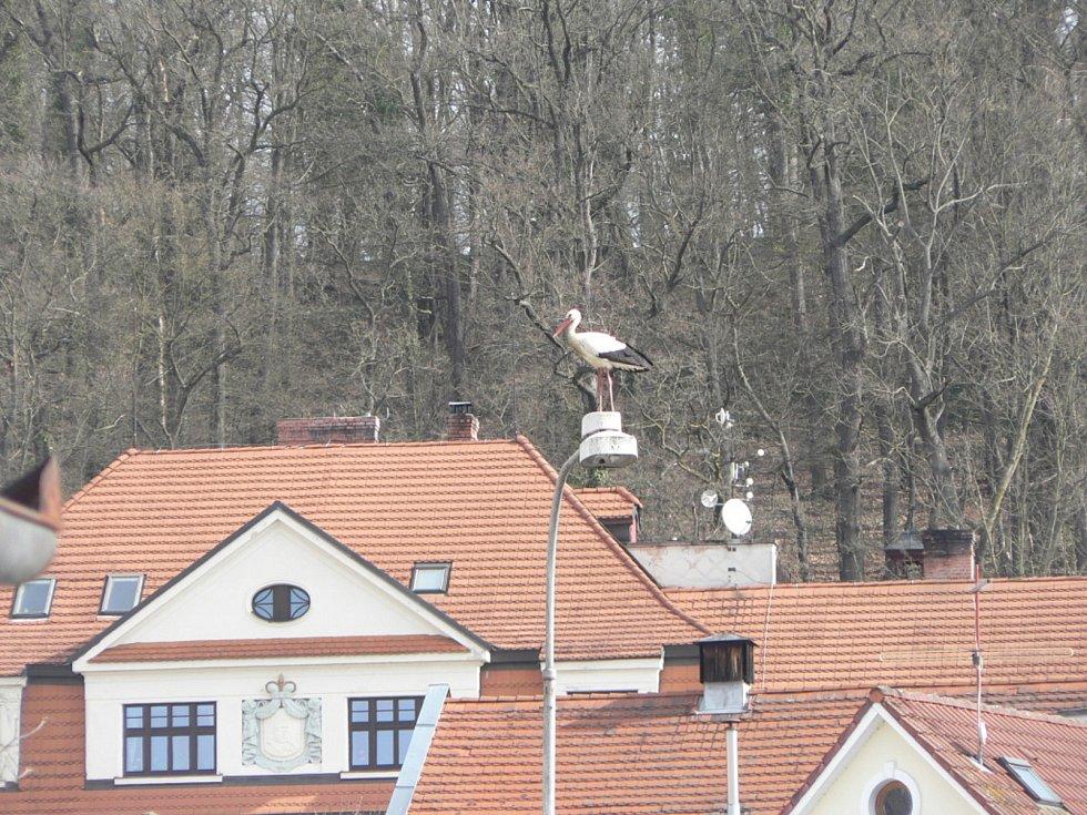 Čápi v Hluboké nad Vltavou.