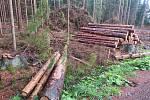 Kalamita způsobená lýkožroutem smrkovým v jižních Čechách po sobě zanechává planiny, napadené dřevo je třeba rychle odtěžit a asanovat.