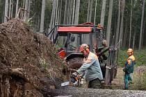 Podle statistiky se průměrná hrubá mzda jihočeských dělníků v zemědělství, lesnictví a rybářství pohybuje nad čtrnácti tisíci korunami.