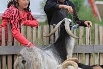 Zoo v Táboře se otevřela v srpnu 2011.