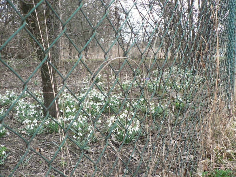 Květy a jiná jarní výzdoba na jihu Čech. Libějovice.