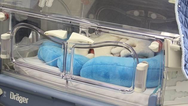 Speciální pelíšky na novorozeneckém oddělení imitují prostředí dělohy. Pomáhají tak správnému vývoji předčasně narozených dětí.