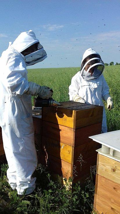 Ani Včelí farmě Vostoupalovi v jihočeských Košicích, která se v oboru pohybuje desátým rokem, se nevyhnul zákeřný parazit - roztoč Varroa.