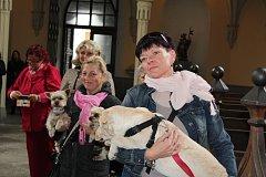 V kostele sv. Jana Nepomuckého v Hluboké nad Vltavou žehnali v sobotu domácím mazlíčkům.
