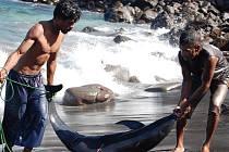 NA ŽIVOT A NA SMRT. Steve Lichtag natočil snímek Poslední lovci. Zachytil v něm domorodé velrybáře z indonéského ostrova Lembata, kteří loví vorvaně bambusovými harpunami. Jeho snímek se bude dnes večer promítat v budějovickém kině Kotva při Ekofilmu.