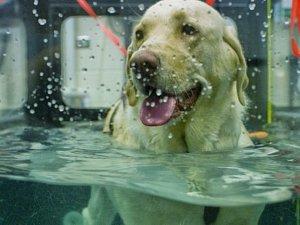 Hydroterapie pro psy.