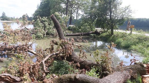 Polomy u Vrbenských rybníků v Českých Budějovicích znamenají tisíce metrů čtverečních dřeva. Likvidují je pracovníci Krajského školního hospodářství,