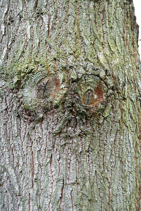 Duch stromový 19 - pozorovatel (vidím tě)
