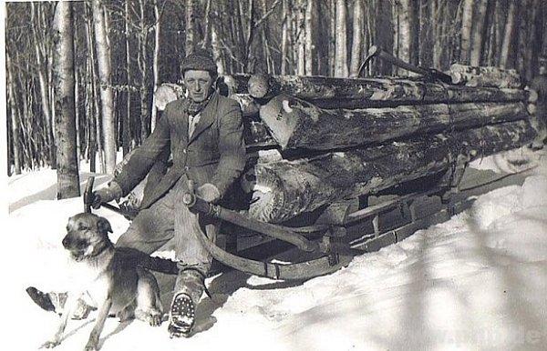 Svoz dřeva před půlstoletím.