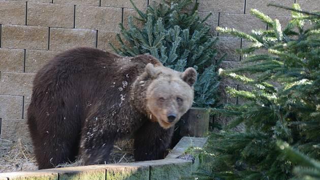 Medvědice oslavila 24. narozeniny