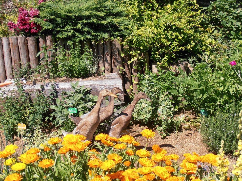 Zahradu u svého domu navrhla podle svého citu, s ohledem k okolní přírodě, s cílem, aby tu s ní mohlo žít co nejvíce dalších živočichů.