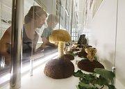 Výstava hub v Jihočeském muzeu v Českých Budějovicích.