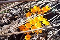 Do botanické zahrady přišlo jaro