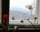 Olga Simonová si důvěrně dopisovala se spisovatelkou Agathou Christie. Nyní žije ve svém království nad Husincem se svým britským kocourem Kájou a ptáčky na krmítku za oknem.