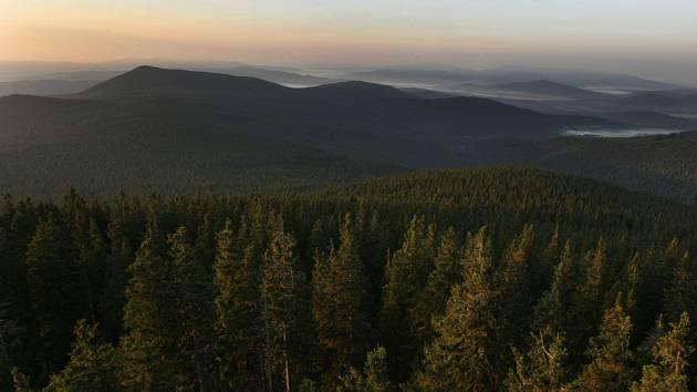 Pohled na šumavské lesy z rozhledny na Boubíně.