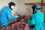 Necelá dvacítka ženistů z Bechyně působí v těchto dnech v Ústřední vojenské nemocnici Střešovice v Praze.