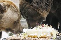Dvacáté narozeniny oslavili medvědi ze zoo Ohrada v Hluboké nad Vltavou parádním těstovinovým dortem s medem, hroznovým vínem, piškoty, ananasem, ořechy, vánočkou a dalšími pochutinami.
