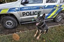 Policejní psovodi trénují své svěřence v terénu, který se podobá prostředí, ve kterém pracují naostro.