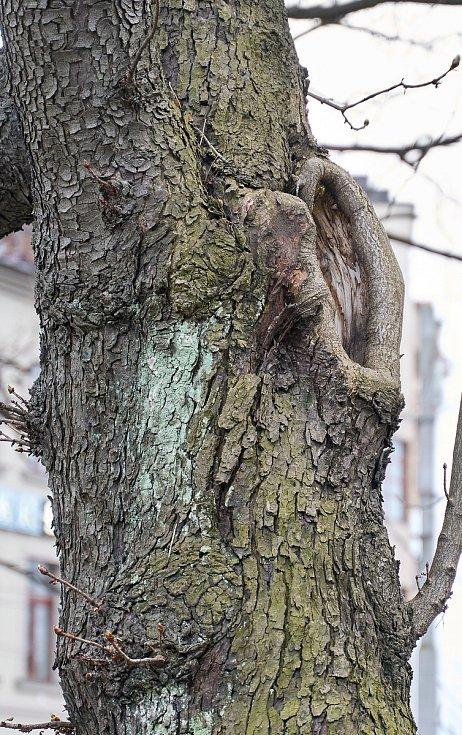 Duch stromový 20 - naslouchač pravé ucho