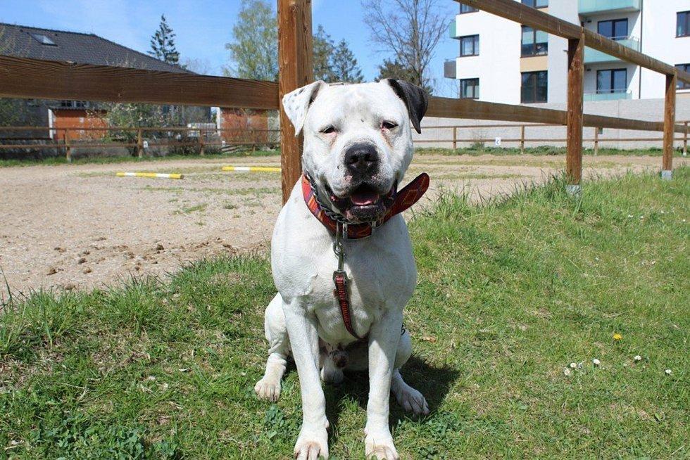 Karlo je sedmiletá argentinská doga. Je poslušný, komunikativní, bez průkazu původu. Je očkován, odčerven a načipován. Karlo byl odebrán původnímu majiteli kvůli  napadení procházejících osob. K napadení došlo v důsledku nezodpovědného chování majitele.