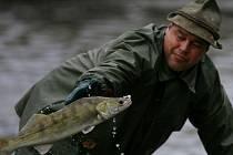 Výlov rybníka Bezdrev třetího největšího ČR. V  produkci ryb se však řadí mezi první. Rybník dostal svůj název dle toho, že původní bažina byla beze stromů, tzv. bez drev. Výlov potrvá do pátku.