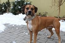 Nero je osmiletý americký pitbulteriér. Je přátelský a vnímavý a ocenil by sportovně založené páníčky. I když je hodný, umí si říci své, proto není vhodný k malým dětem. Zájemci by měli mít zkušenost s chovem takovýchto psů. Je kastrovaný.