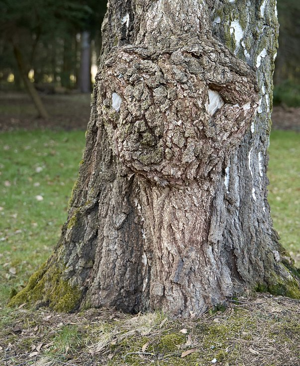 Duch stromový 17 - bělooký