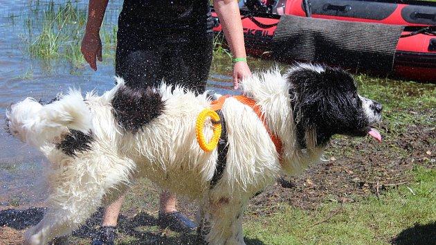 Česko-německý tábor vodních záchranných prací psů