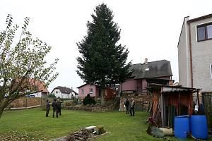 Ilustrace - strom pro Plzeň z Kařezu.