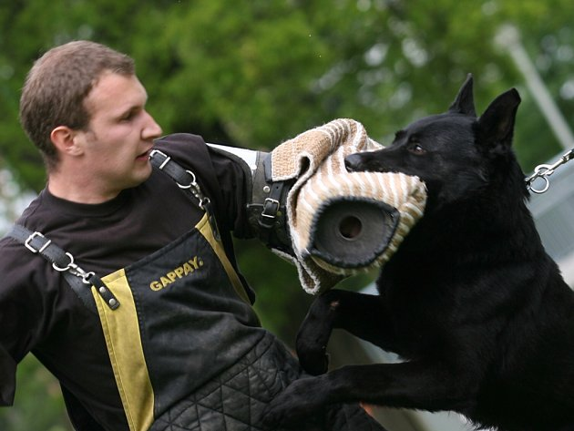 Jiří Frank  při ukázce dovednosti policejních psů.