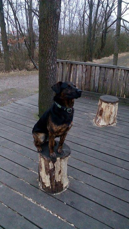 V pátek 4. září kolem 18. hodiny někdo u rybníka Bojiště mezi obcemi Kvítkovice a Čakovec postřelil psa Arta, který na následky zranění téhož dne večer zemřel.