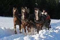 Vyjížďky na saních či povozech tažených koňmi nabídne Národní park Šumava.