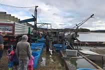 Pro většinu návštěvníků byl výlov rybníka Žár na Novohradsku příjemným zážitkem.