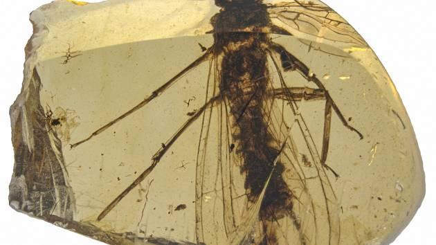 Nově objevené druhy fosilií řádu pošvatek, nazvané zatím pracovně Rolling Stoneflies.
