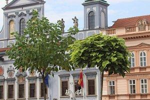 Stromy na českobudějovickém náměstí